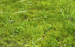 m-Sph_cultivation18.jpg