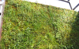 wallgreening6M.jpg
