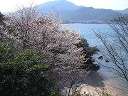 PrunusJamasakuraSMMiyajima20010402aM.jpg