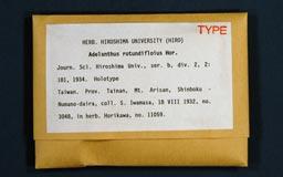 adelanthusrotundi1m.jpg