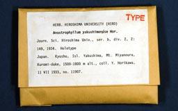 anastrophyllumyakushi1m.jpg
