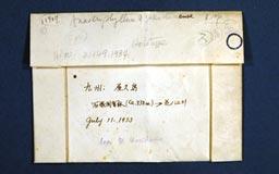 anastrophyllumyakushi6m.jpg