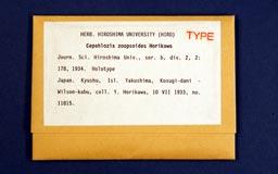 Cepahloziazoopsoides1m.jpg