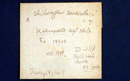 chiloscyphusbesch2m.jpg