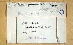 frullaniayakushi3m.jpg