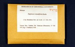 haploziarotundifolia1m.jpg