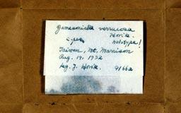 jamesoniellaverrucosa5m.jpg