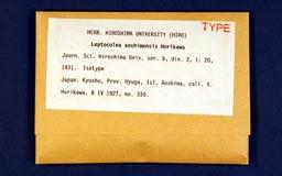 leptocoleaaoshimisotype2-1m.jpg