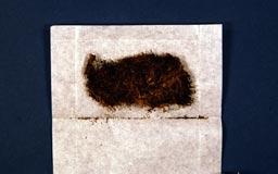lophoziacuriosissima16m.jpg