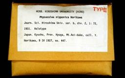 physocoleanipponi1m.jpg