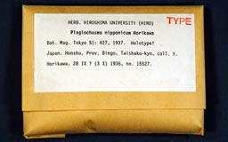 plagiochasmanipponi3-1m.jpg