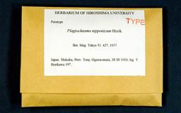 plagiochasmanipponi6m.jpg