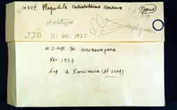 plagiochilacuriosissima3m.jpg