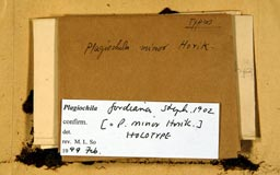 plagiochilaminor2m.jpg
