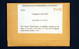 calymperescarii1m.jpg