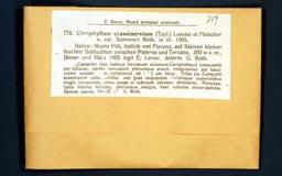 cirriphyllumcrassiner776-1m.jpg