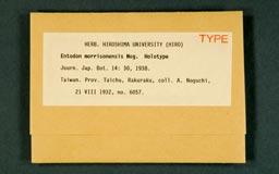 entodonmorriso1m.jpg