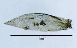 Nog7583stem-leaf1M.jpg