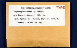 isopterygiumtawadae1m.jpg