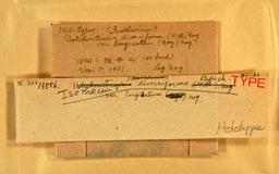 isotheciumdiverslongiset2m.jpg