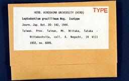 leptodontiumgracillimum1m.jpg