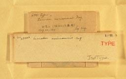 leucodonmorrisonensis2m.jpg