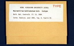 macromitriumbathiad1m.jpg