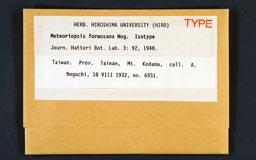 meteoriopsisformosana1m.jpg