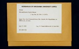 microphilonotisfrigida2-1m.jpg