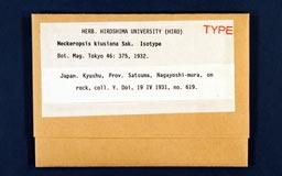 neckeropsis_kiusiana1m.jpg