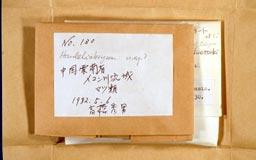 neckeropsis_takahashii1-2m.jpg