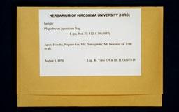 plagiobryumjaponicum1m.jpg