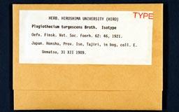 plagiothecium_turgescens1m.jpg
