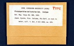 platyhypnidium_delicatulum1m.jpg