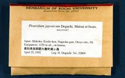pleuridium_japonicum1m.jpg