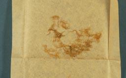 pseudobarbella_angustifolia3m.jpg