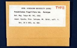 pseudoleskea_flagellifera1m.jpg