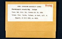 pterobryopsis_arcuata1m.jpg