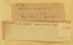 pterobryopsis_morrisonicola2m.jpg
