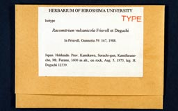 racomitrium_vulcanicola1-1m.jpg