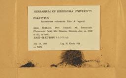 racomitrium_vulcanicola10-2m.jpg