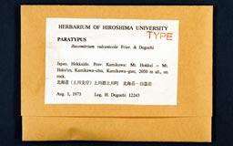 racomitrium_vulcanicola11-1m.jpg