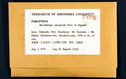 racomitrium_vulcanicola12-1m.jpg