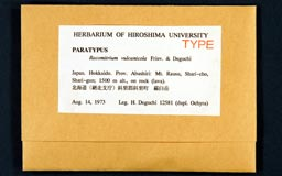 racomitrium_vulcanicola13-1m.jpg