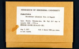 racomitrium_vulcanicola15-1m.jpg