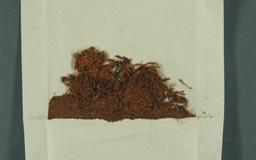 racomitrium_vulcanicola15-2m.jpg