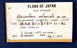 racomitrium_vulcanicola15-3m.jpg