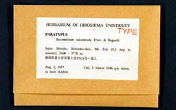 racomitrium_vulcanicola2-1m.jpg