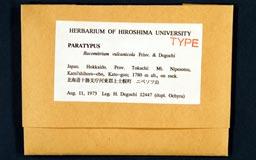 racomitrium_vulcanicola9-1m.jpg