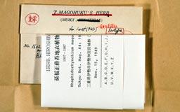 rhaphidorhynchium_magofukui2m.jpg